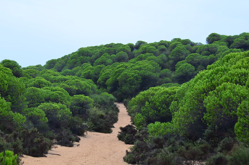 PN. Doñana, dunas, pinos y bichos 23073590679_b454c037b3_c