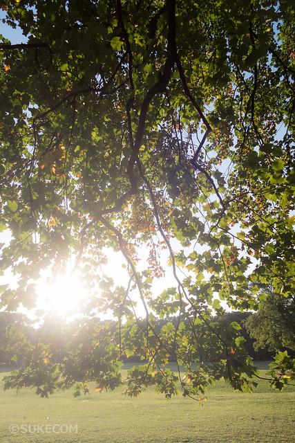 小金井公園で満開のコスモスを撮影