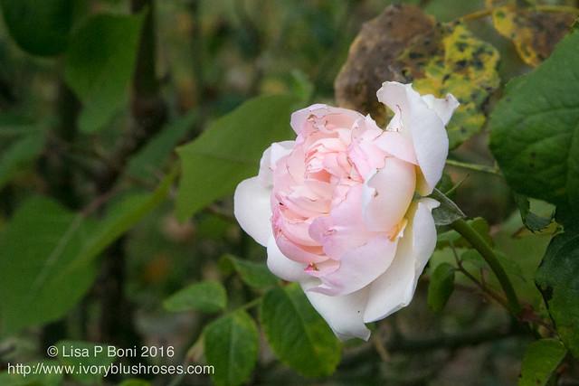 2016.10.31-Garden01