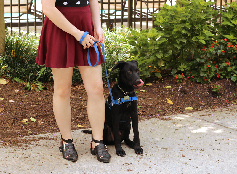 Black Lab Mix Puppy, Maroon Flippy Skirt, and Pointed Black Ankle Boots