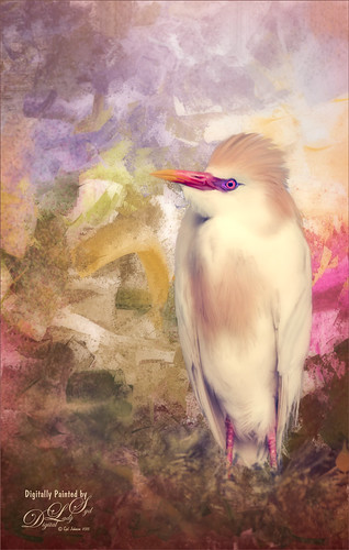 Image of a painted Cattle Egret