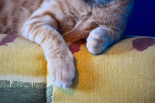 Jerry, gatito rubio guapo muy dulce y bueno, esterilizado, nacido en Abril´15 en adopción. Valencia. ADOPTADO. 20828328433_935c6ca6f1