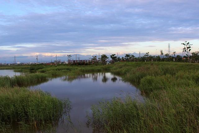 茄萣濕地由黑面琵鷺欽點,成為台灣第54座IBA。攝影:廖靜蕙