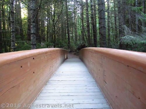 Foot bridge to the Lady Bird Johnson Grove in Redwood National Park, California