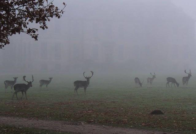 Murky deer