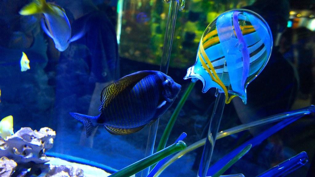 Mystic Aquarium Peter Eimon Flickr