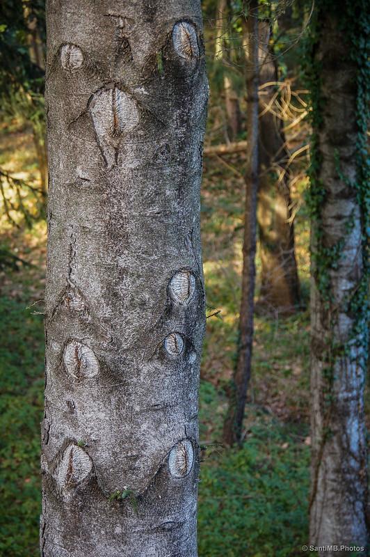 El árbol que lo ve todo