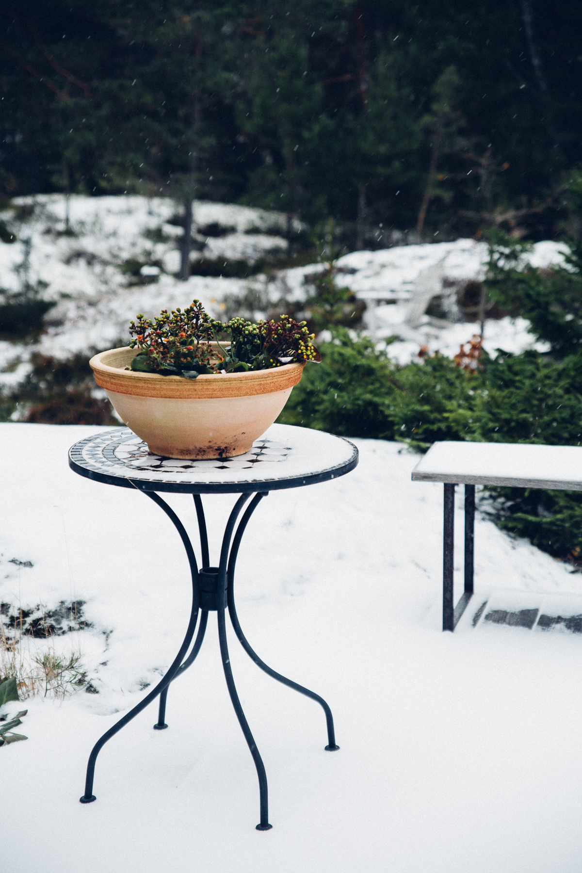 Winter | Cashew Kitchen