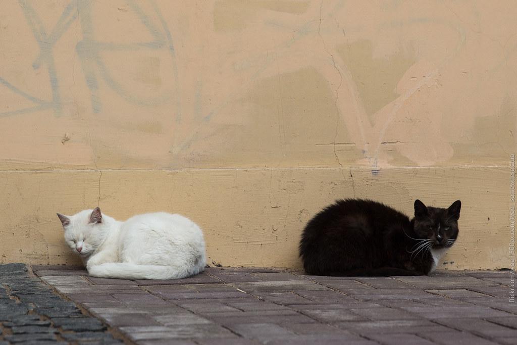 Кошки в Санкт-Петербурге, чёрная и белая