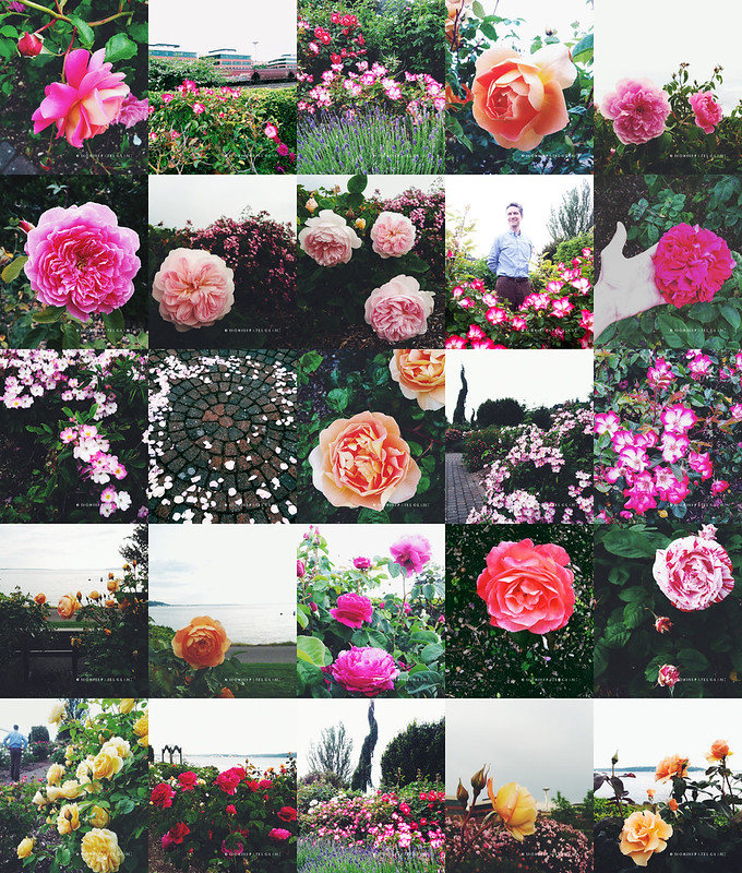 centennial park rose garden collage