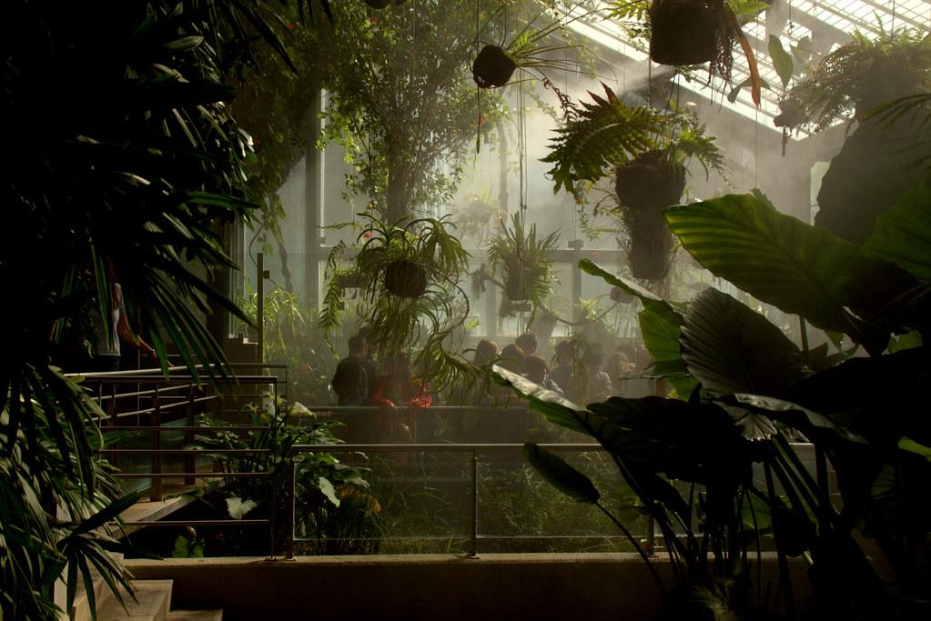 Niños en el jardín botánico