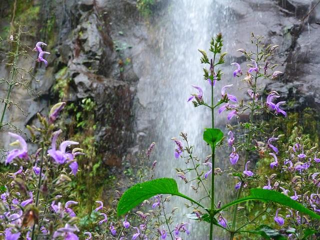 Cascada y flores