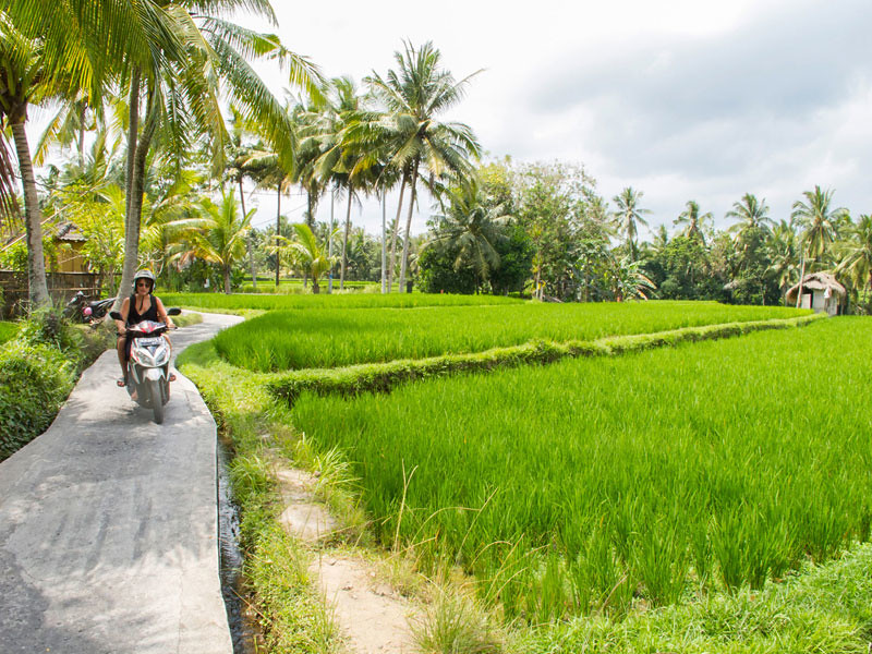 6-paddy-fields-via-TripCanvas