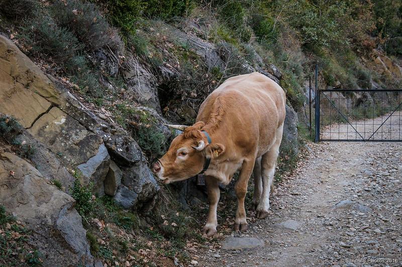Una puerta en el camino para que no se escape el ganado