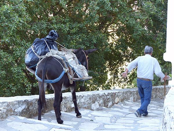 un âne dans les escaliers
