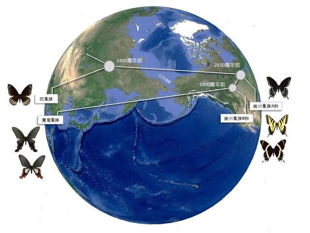寬尾鳳蝶的祖先由北美洲經白令陸橋進入亞洲的示意圖 。顏聖紘繪製;林務局提供。