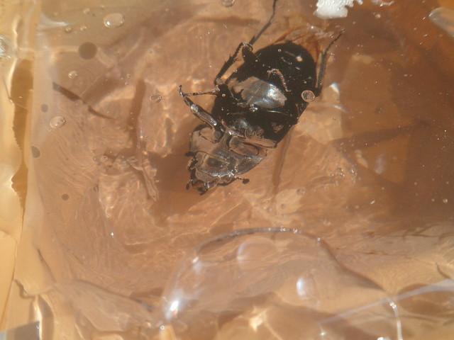 Insecte pris dans la glace 21938527836_ba06c5d3ba_z
