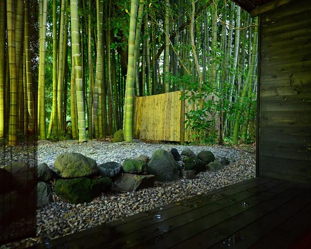 Bambúes del ryokan de Hakone