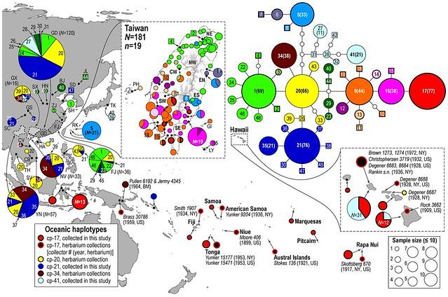 構樹遺傳類型與分布圖。圖片提供:鍾國芳