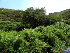 La végétation le long du Frauletu