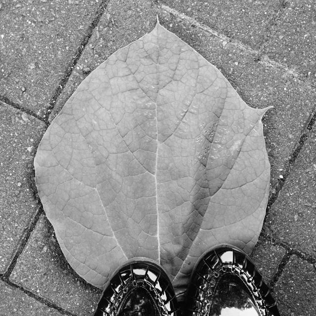 huge leaf on ground