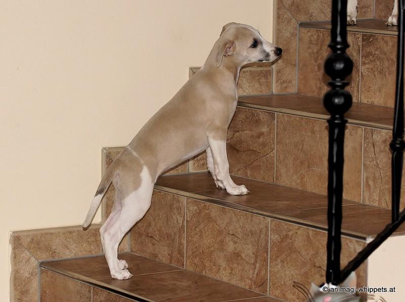 Tanga will wissen was im oberen Stock auf sie wartet!