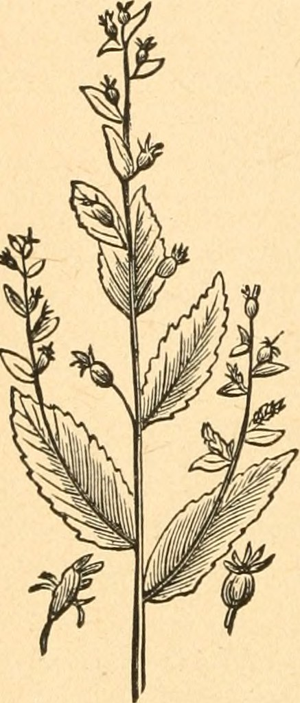 Image From Page 121 Of The Complete Herbalist Or The Pe Flickr