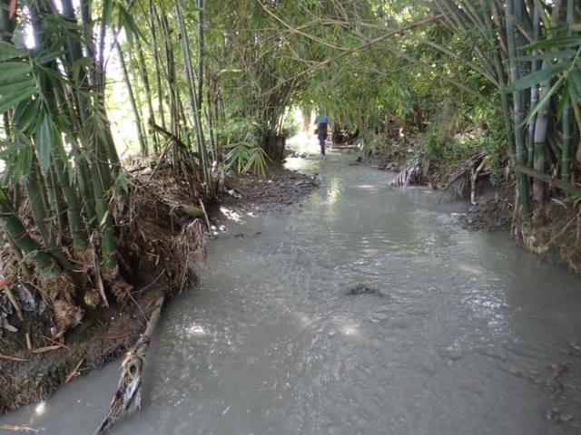 凌雲橋溪溝植被豐富,能夠涵養水源、保護下游河岸不受沖刷。照片提供:美濃愛鄉協進會。