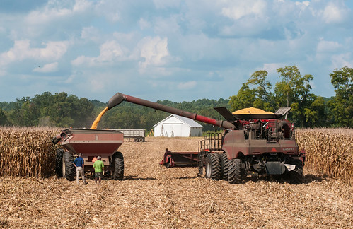 Virginia farmers harvesting their corn