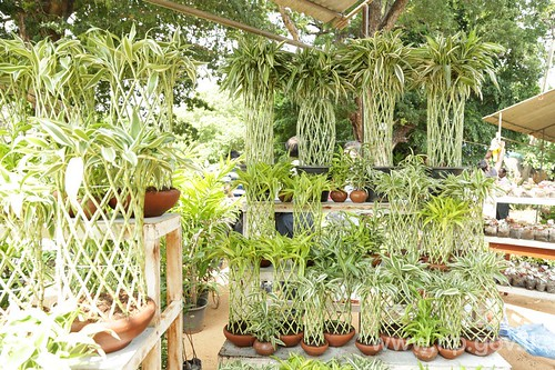 Floriculture and Plant Exhibition 5 – 11 November, 2016