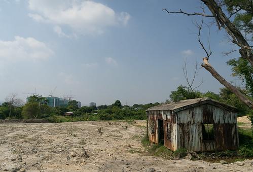 那麼美的花景後面, 就是廢棄的農地
