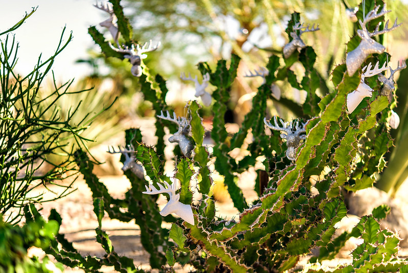 christmas decorations in the desert cactus