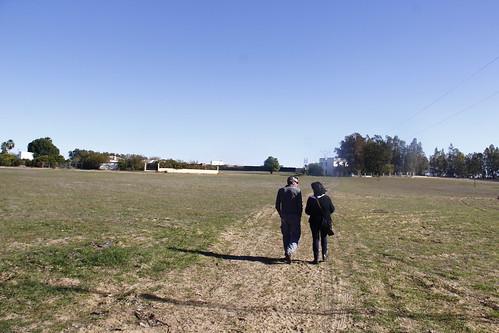 AionSur: Noticias de Sevilla, sus Comarcas y Andalucía 23381125956_4f01b126b0_d 20.000 pistacheras para revolucionar la agricultura de la comarca Empresas Paradas Provincia Sin categoría