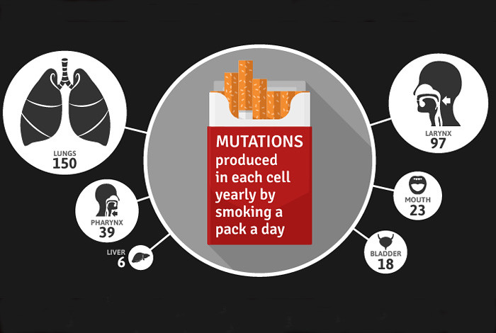 Research on mutational signatures in the genome of cancer cells shows that smoking increases the risk of several cancer types by raising the overall number of mutations, even in tissue not directly exposed to smoke. Photo courtesy of Wellcome Trust Sanger Institute.