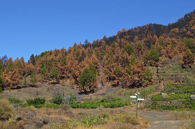 Forest fire, San Nicolas, La Palma