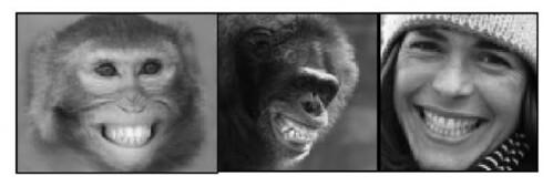 面部表情几乎一致,但猿猴叫'bare-teeth display',人类叫微笑