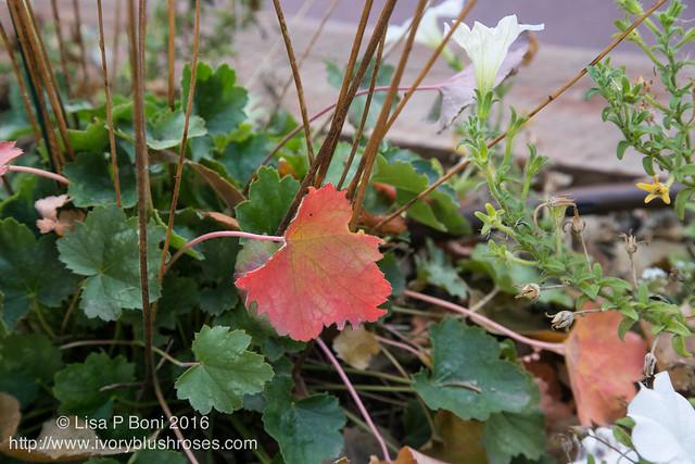 2016.10.31-Garden12