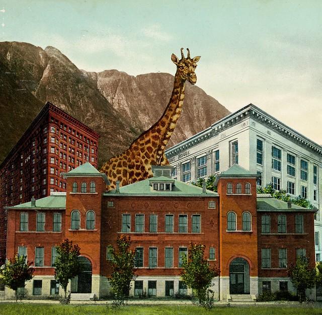 New Giraffe in Town