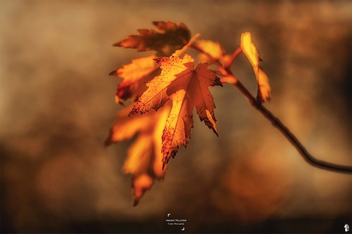 Autumnal abstract photography funkyporcupine