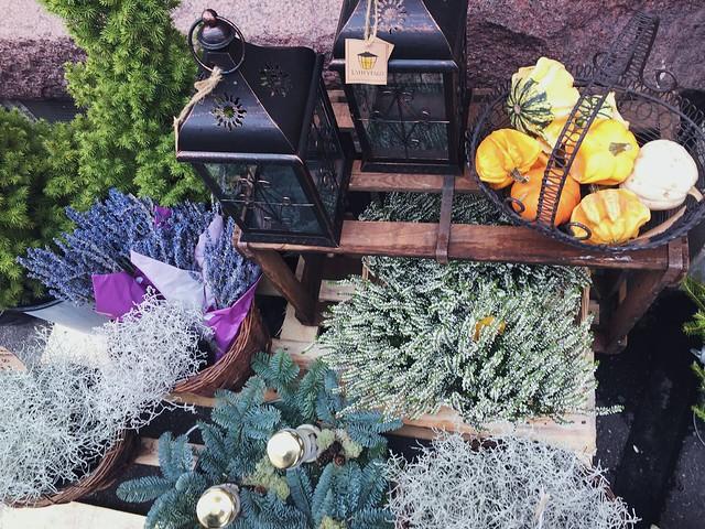 kukakauppa, edusta, sisäänkäynti, oven suu, kauniita asetelmia, yksityiskohtia, details, beautiful arrangements, kukkakaupan edusta, front of the flower shop, helsinki, finland, syksy, autumn, fall, vuodenaika, kausi, kukar, kasvit, heather, kanerva, pumpkins, kurpitsat, lyhdyt, lanterns, lamp, havut, havukasvit,