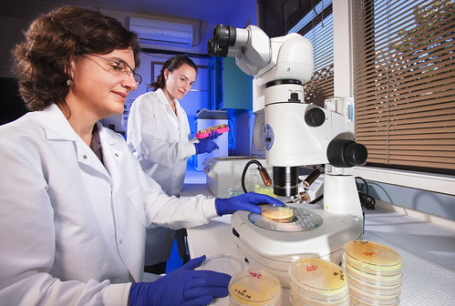 ARS scientists identifying bacterial pathogens in the lab