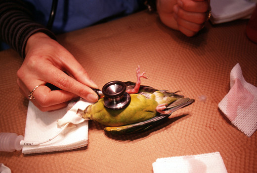 Letters of Note: The Parakeet Has a Goiter