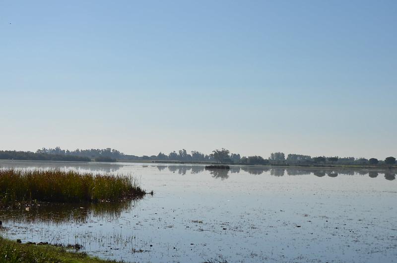 PN. Doñana, dunas, pinos y bichos 22814284523_faa89053a5_c
