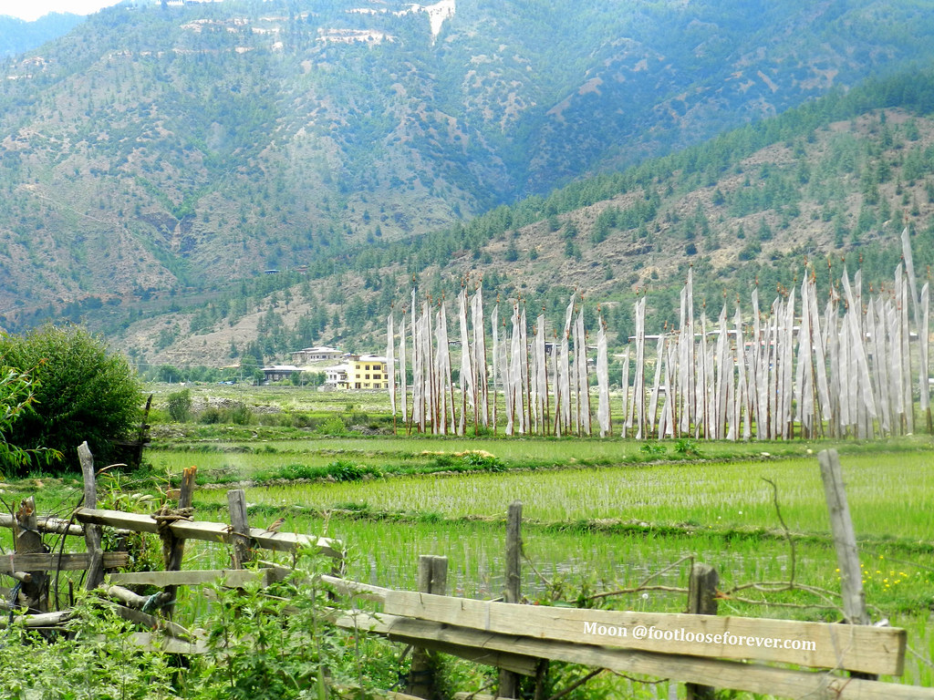 paro valley, bhutan, paddy fields in Paro
