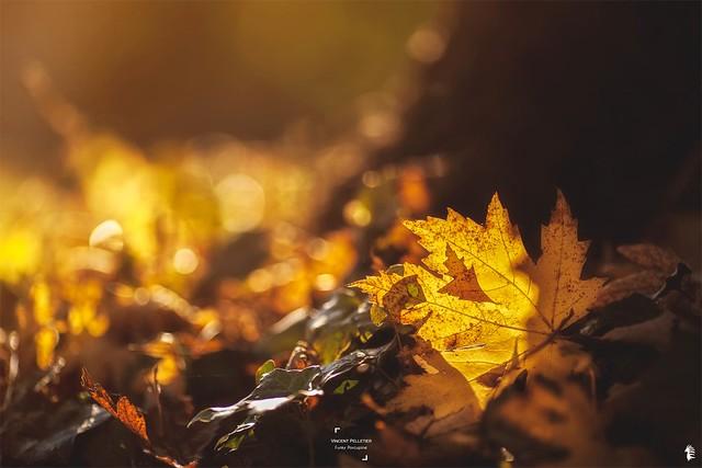 nature colors autumn bokeh photography