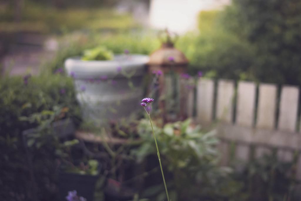 allt om trädgård