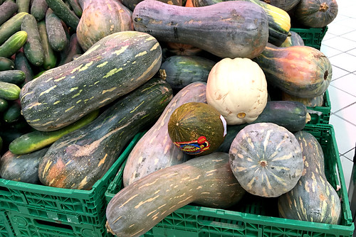 cucurbitaceae family of gourds, squash & pumpkins