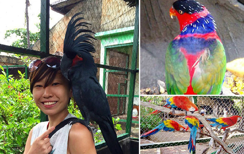 Gili Meno Birds