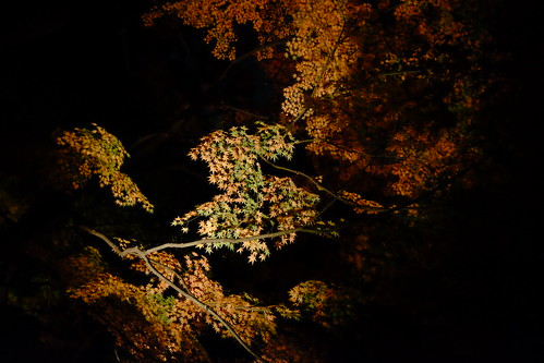 RIKUGIEN Colored Leaves light up 2016 12