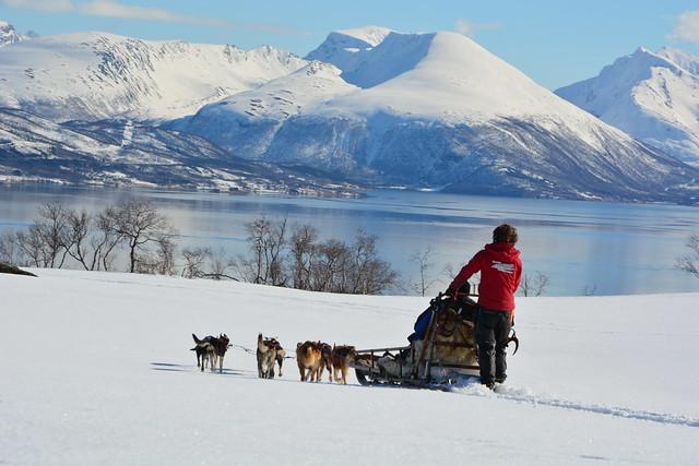Trineo de perros en Noruega (Laponia)